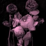 ROSES POSTERS FROM DEBBIE CARLOS